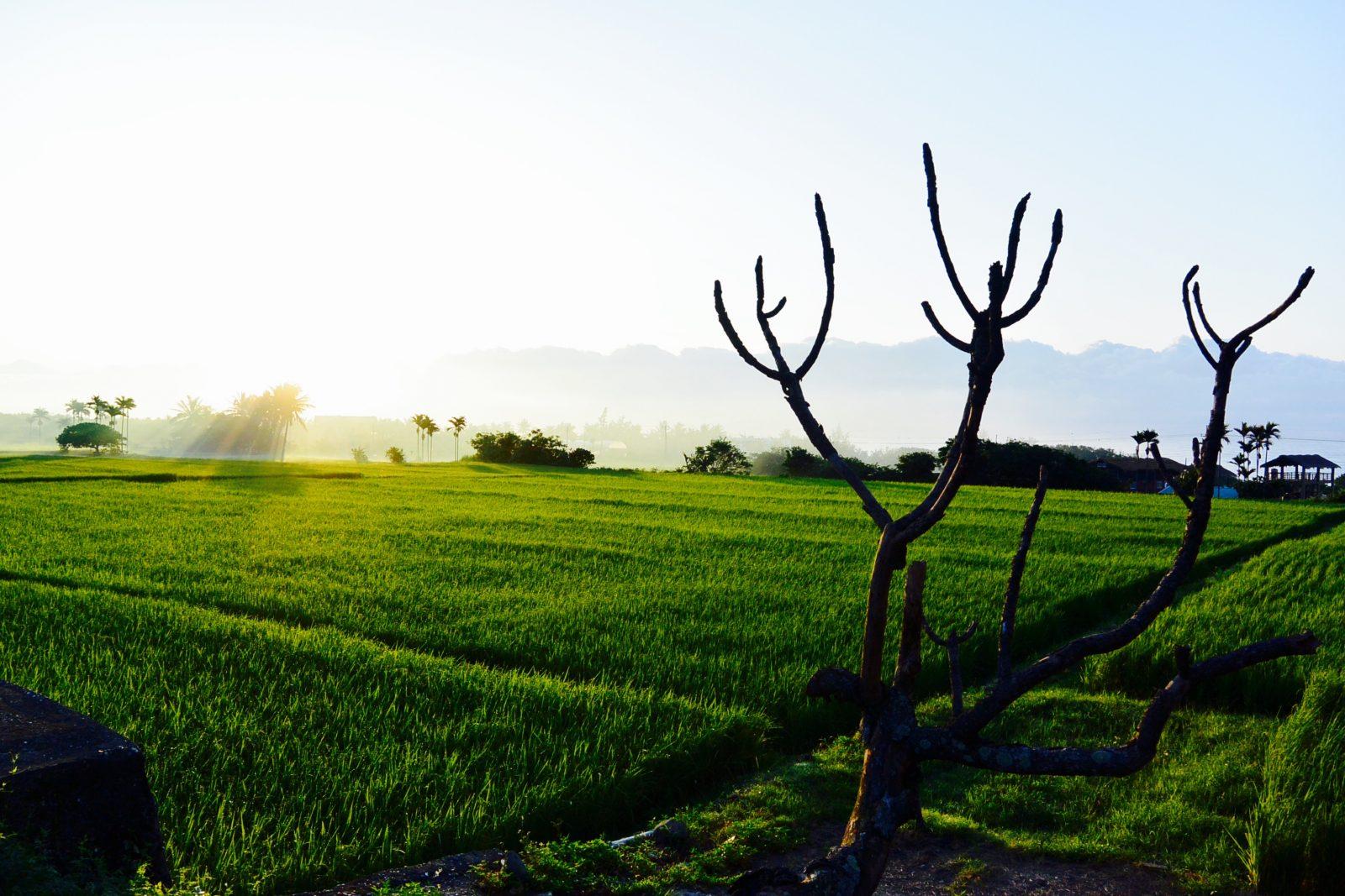 Taiwan-Taitung-Dulan-Sunrise-WaGaLiGong-Surf-Hostel-e1464916588465